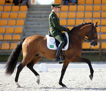 Cavalo Lusitano, o futuro da Dressage?