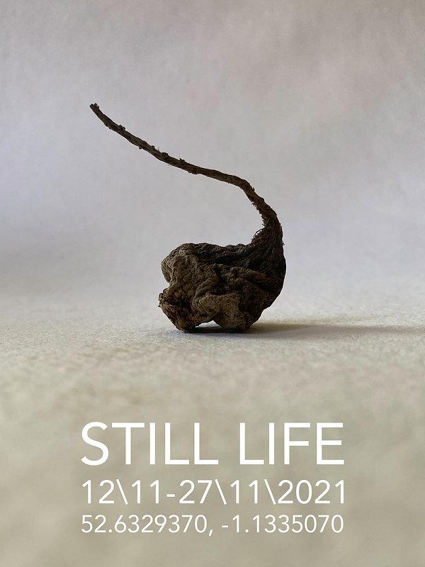 Still Life Root.jpg