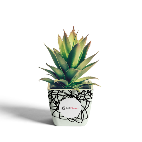 plant-1-lil-flower.png