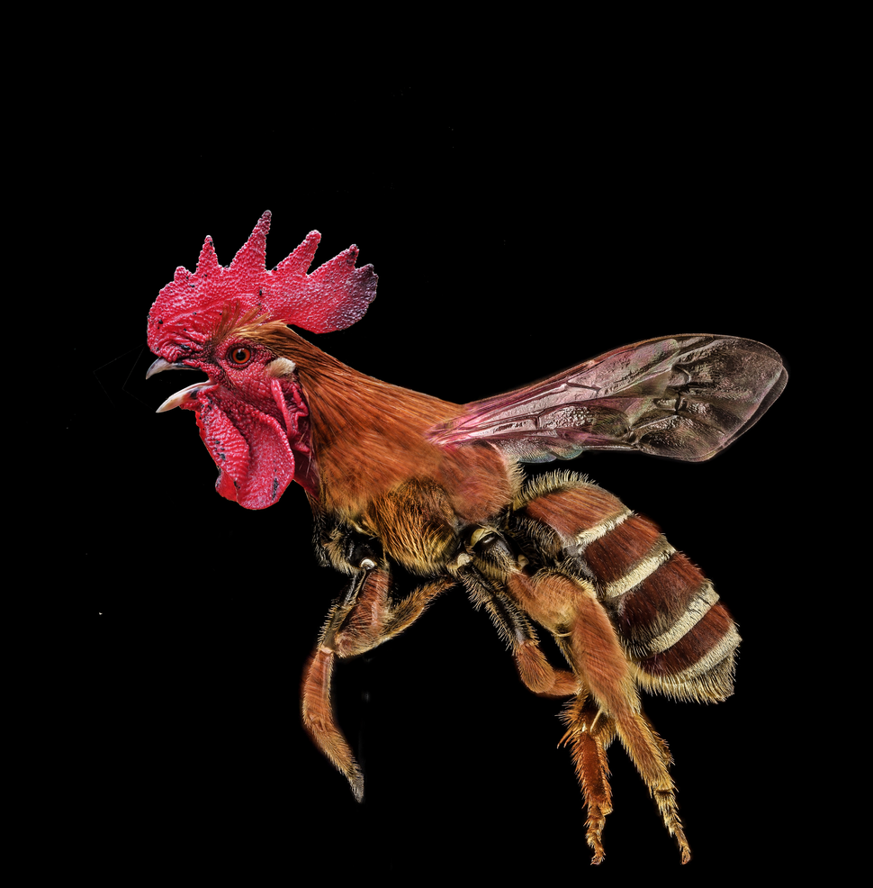 bee-chicken.png