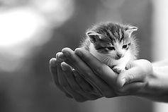 zoogle gatti rifugio gattile pensione per gatti pet sitting