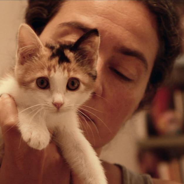 Consulenza etologica felina