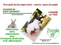vuoi sapere tutto sul coniglio?