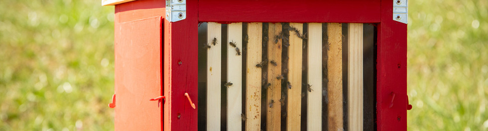 un po' delle mie api