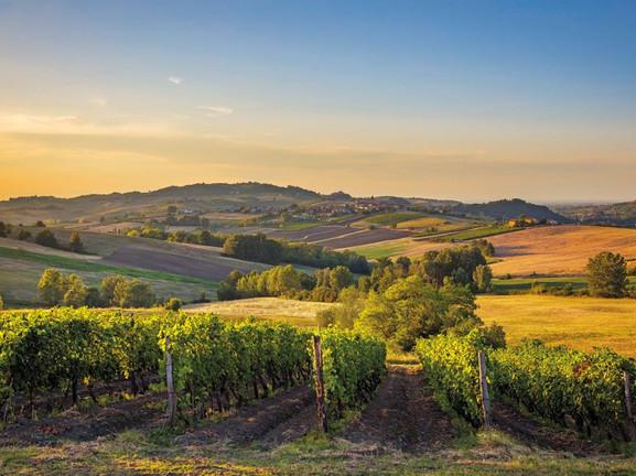 Vineyards in Moncalvo