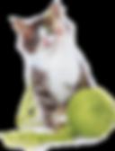 brochure zoogle gatti