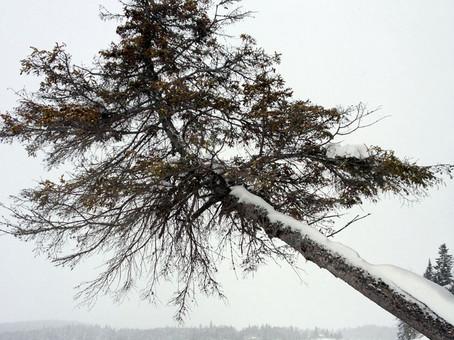 Lac Kiamika-Laurentides.02_Quebec-13.jpg