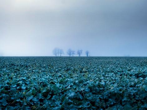 Normandie.02_dec-08.jpg