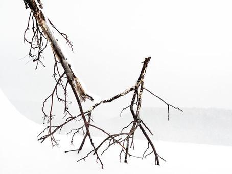 Lac Kiamika-Laurentides.09_Quebec-13.jpg