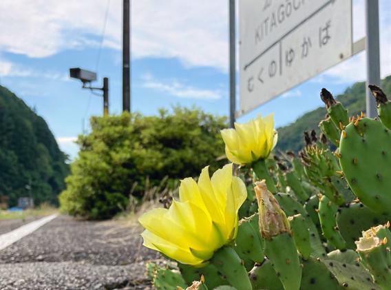 北河内駅の足元に咲いた小さな花  撮影 清流 松本