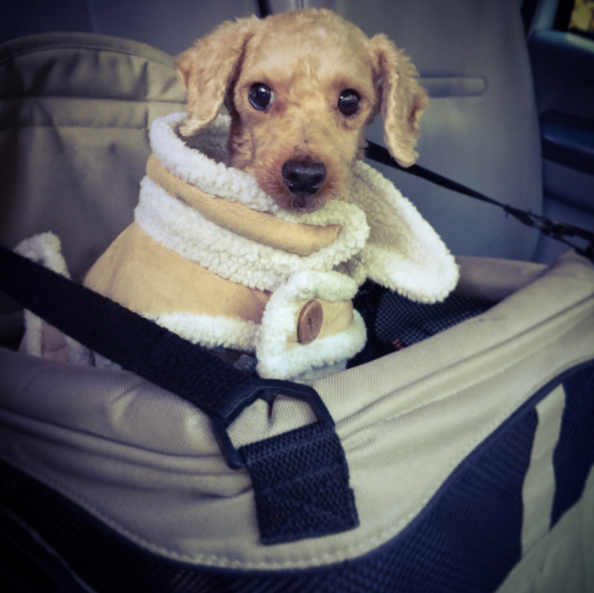 TEDDY IN HIS NEW CARSEAT