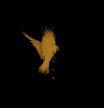 Jackdaw_Trailer