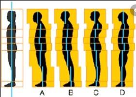 Les 3 piliers d'un dos en bonne santé!