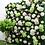 Thumbnail: Luxury custom 3D hydrangea Black rose floral back drop/ artificial flowe