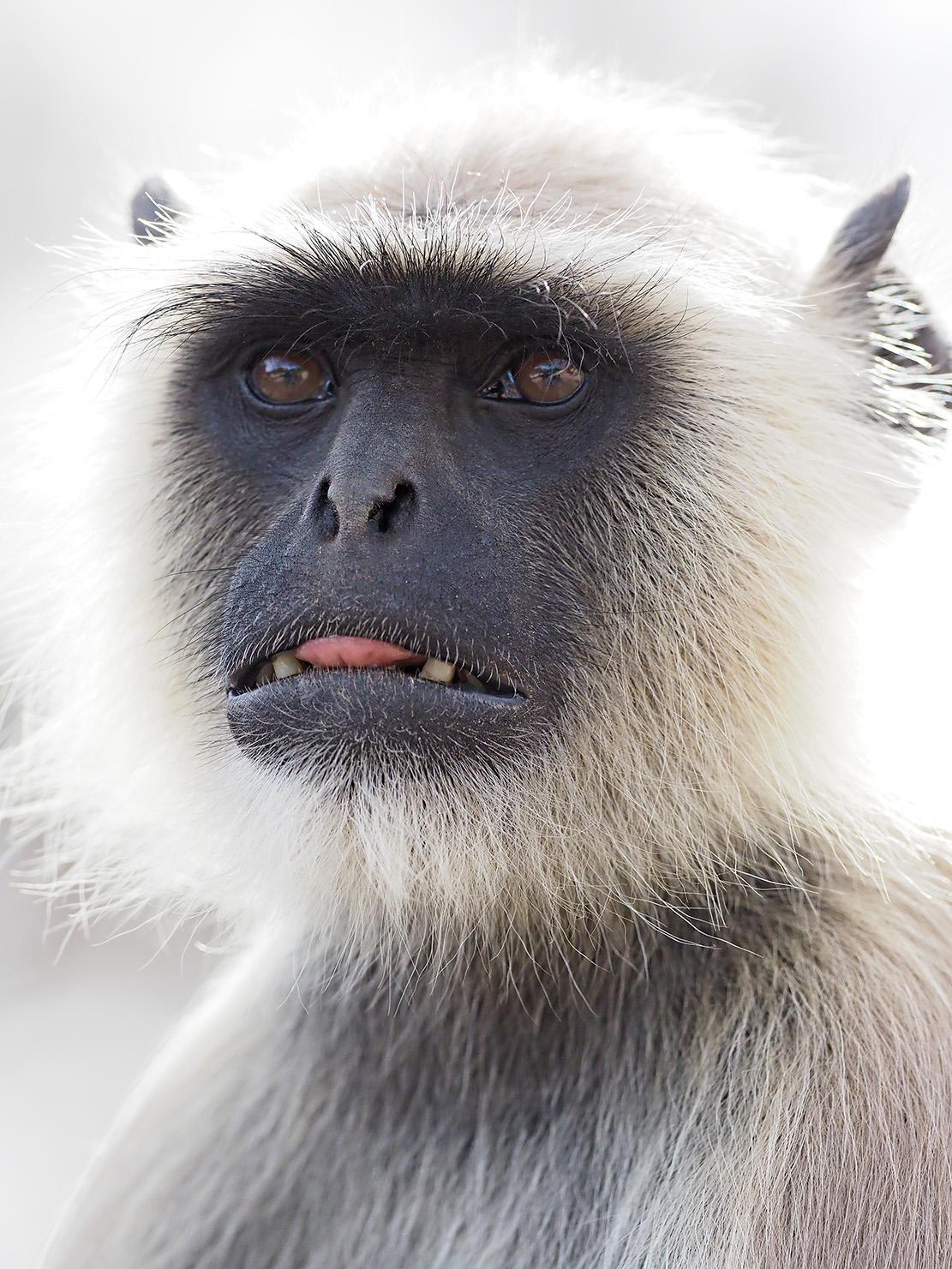 Wildlife portraits by Ranjan