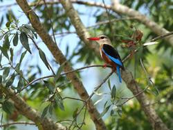 Wildlife - Birds by Ranjan