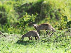Wildlife by Ranjan Ramchandani