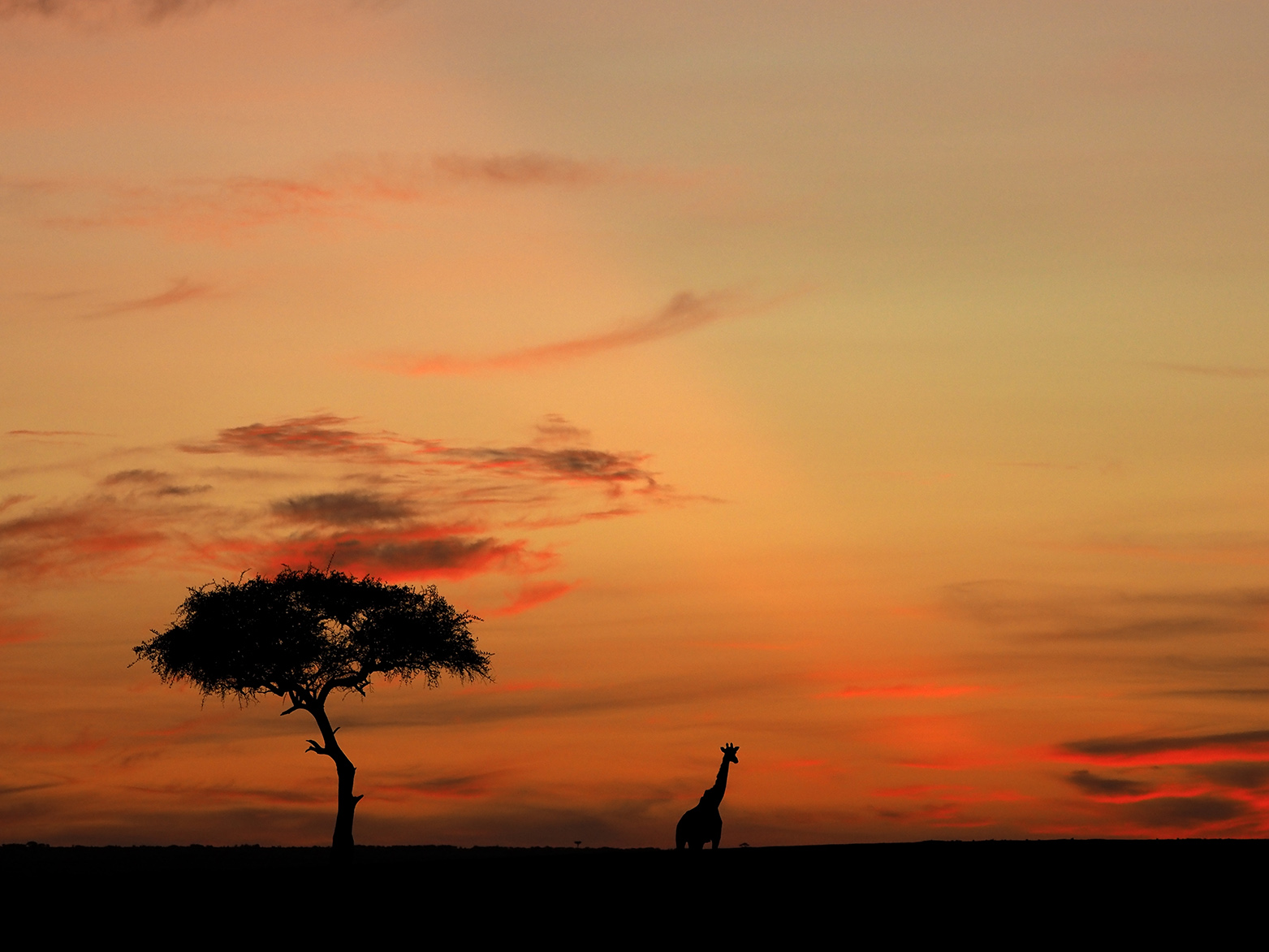 Landscapes in the wild by Ranjan