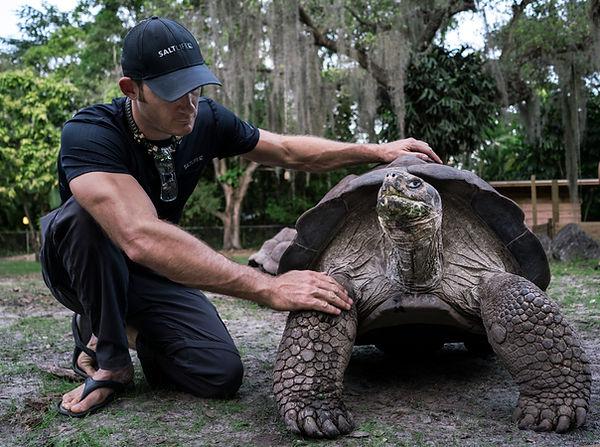Galapagos tortoise me c.jpg