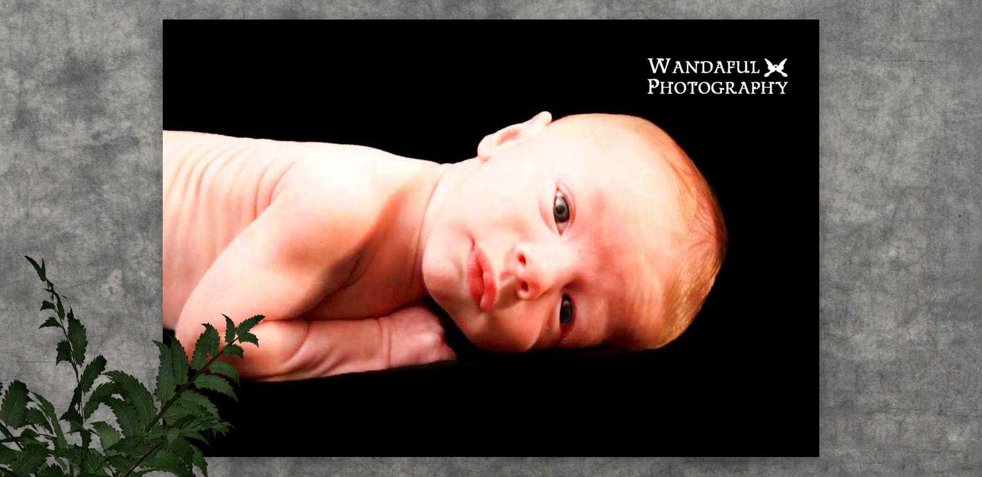 0 Jackson Baby by WP.jpg