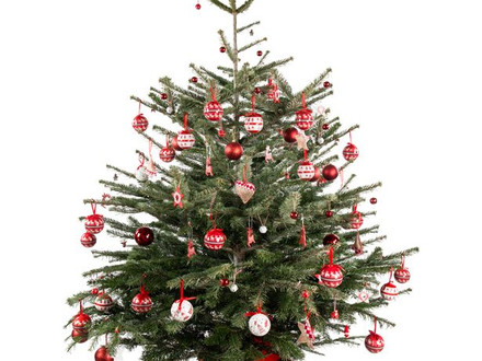 Real Christmas Tree collections
