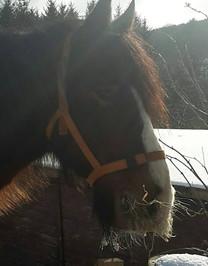 Feock horse in the snow.jpg