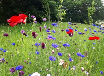Devoran School wild flower garden