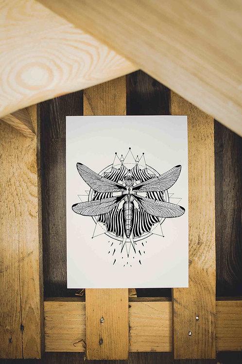 Plakát Vážka