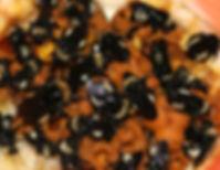 Bombus pensylvanicus colony