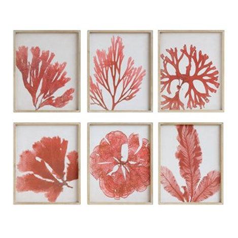 Set 6/Wood Framed Coral Wall Décor