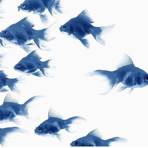 Blue Fish Art