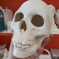 Large Skull with cut outs $42