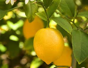 Essential Oil Spotlight - 29 Ways Lemon Can Help You!