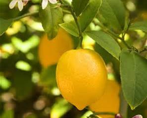 Essential Oil Spotlight - 29 Ways Lemon Can Help You!
