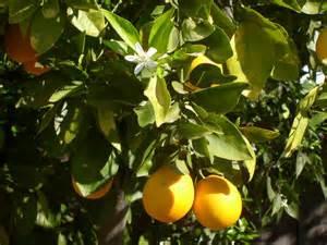 EO Spotlight - 21+ Ways Orange May Benefit You!