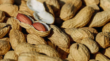 The Rise of Peanut Allergies