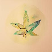 Cannabis Constellation