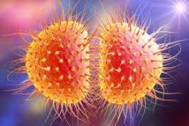 1st Covid Now Super Gonorrhea Outbreak