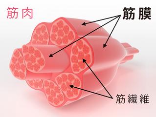 筋膜リリース/リラクゼーション彩