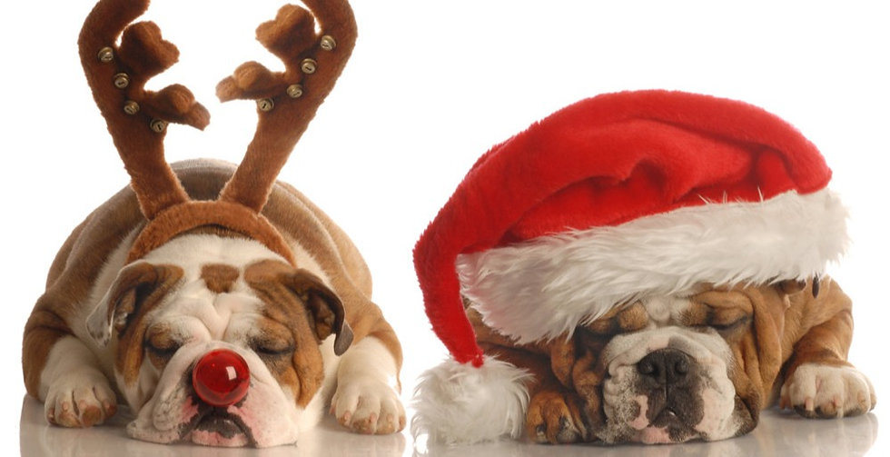 Christmas%20Bulldogs_edited.jpg