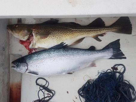 Fiskehjelp på toget fra Voss til Oslo
