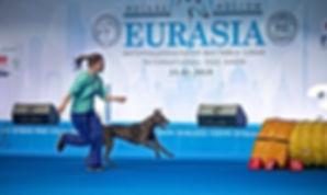 соревнования по аджилити на выставке Евразия