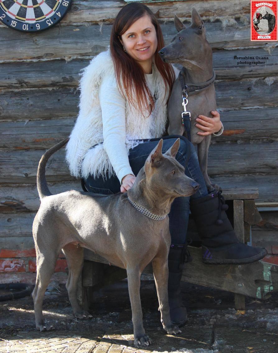 Любимые питомцы)