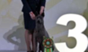 """Интернациональная выставка собак  """"Мемориал А.П.Мазовера 2019"""""""