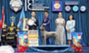 Лучший голубой ТРД на шоу IMPACT в Тайланде