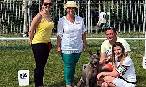 CACIB Bytom PL - Интернациональная выставка собак