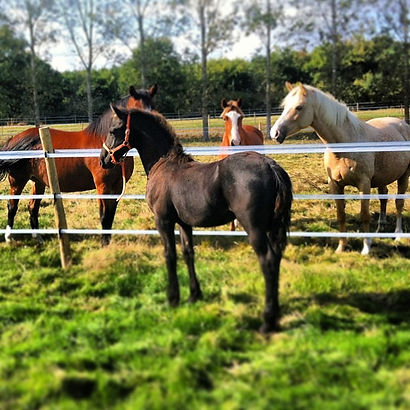 Pension pour chevaux proche La Roche sur Yon