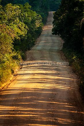 estrada de terra na floresta