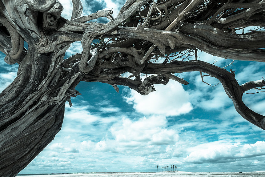 árvore seca no deserto