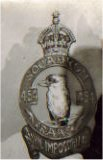 Kookaburra badge